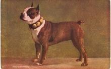 M T Sheahan 1906 Boxer Dog Artist Postcard