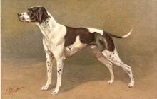 J Rivst Spaniel Dog Vintage Postcard