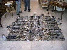 7081 Gray Fox Skin Rug
