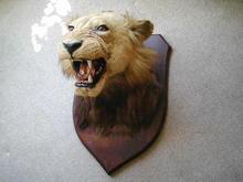 BLACK MANED LION HEAD ON SHIELD