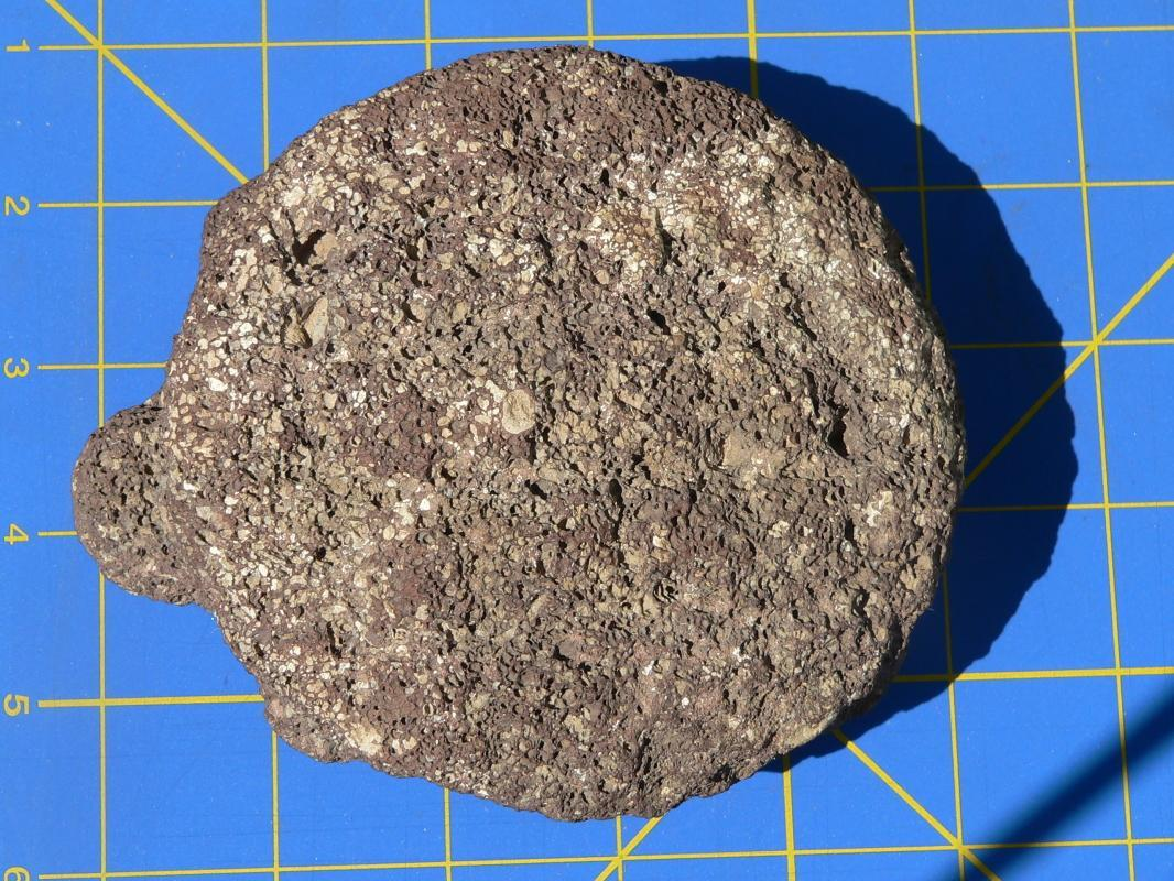 As Found Hohokam Anasazi Tortoise Effigy Fetish