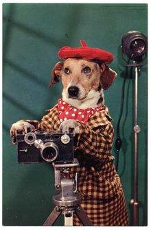 Dressed Dog Photographer with Argus C3 Camera Postcard