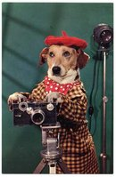 Dressed Dog Photographer with Argus C3 Camera Postcard