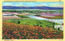 Blossoms and California Poppies, Santa Clara Valley Postcard