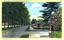 Esplande, Chico, California Postcard