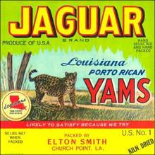 Jaguar Brand Louisiana Porto Rican Yams