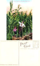 Postcard of a father and son standing in a corn field in the Great Northwest 1910