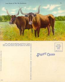 Postcard of Long Horns of the Ole Southwest