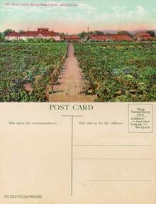 Postcard of the Wine Cellars, Italian-Swiss Colony, Asti, California