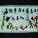 Clay Bug Box