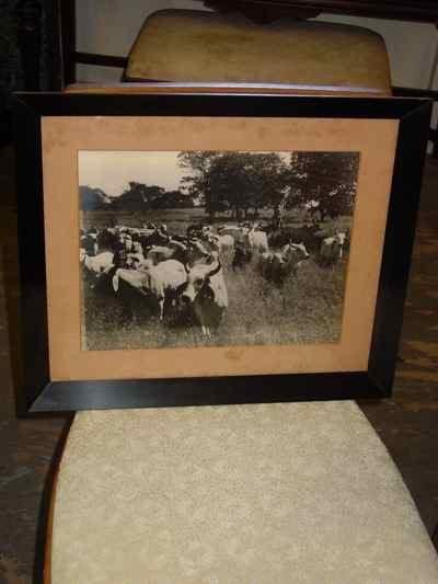 La Punta of Jose Estrada Palma G Herd of CEBU Cattle Photograph