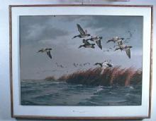 David Maass  Print of CANVASBACK DUCKS - FAL Print