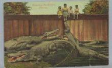 Black Americana POSTCARD - Tempting The Gators - Ethnographic
