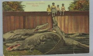 Black Americana POSTCARD - Tempting The Gators - Ethnographic