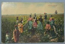 Black Americana POSTCARD - Picking Cotton - Ethnographic
