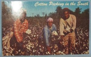 Black Americana POSTCARD - Cotton Picking In The South - Ethnographic