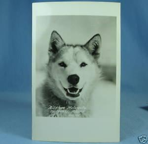 MALAMUTE Dog Fairbanks ALASKA 1926 Nylen RPPC Postcard