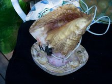 CONCH SHELL TABLE NIGHT LIGHT