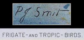 BOTANICAL CHROMOLITOGRAPH FRIGATE & TROPIC