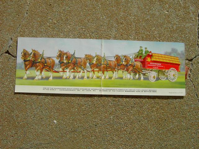 BUDWEISER CLYDESDALE CARD