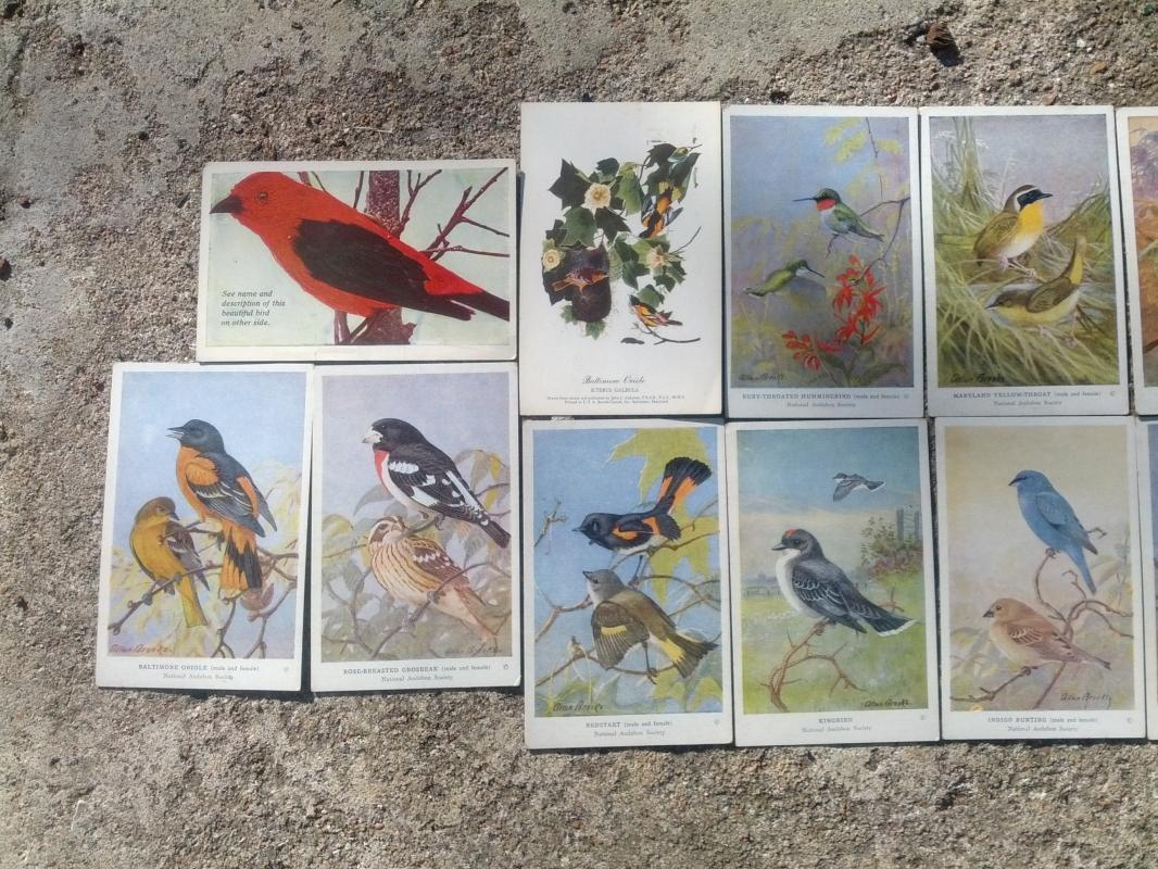 national audibon society song bird postcard allen brooks signed paper prints