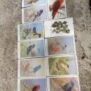 national audibon society song bird postcard allen brooks signed paper prints