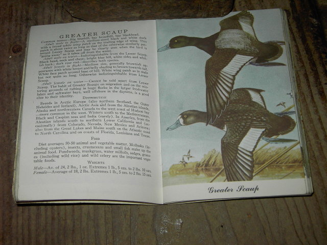 SPORTS AFIELD DUCK IDENTIFICATION GUIDE BOOK GOOSE WATERFOWL GAMEBIRD PUBLICATION HEARST 1954