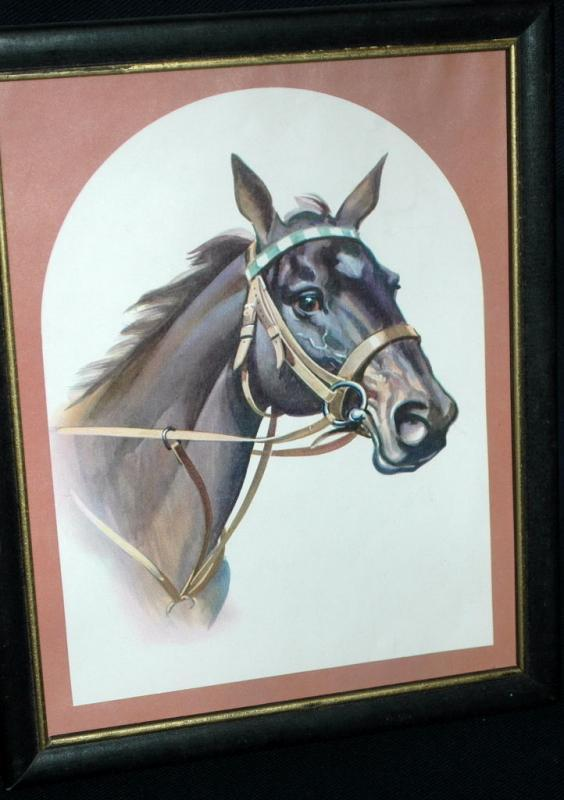Race Horse Print in Frame  Free shipping