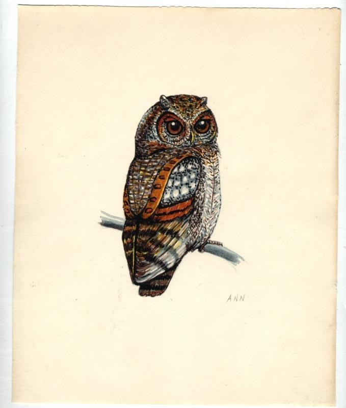 Pen Ink and Watercolor of Owl by Ann Ramhorst 1976  Free Shipping