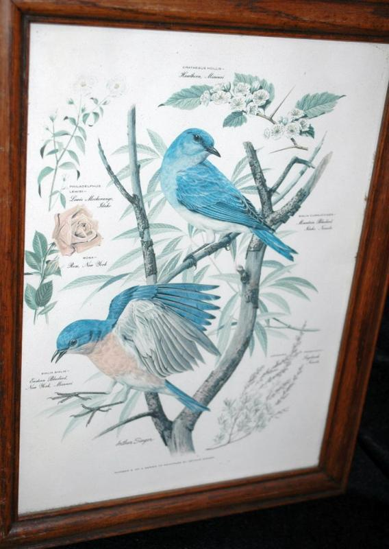 Vintage Framed Arthur Singer Print of Birds and Flowers. Blue Birds   #2 in the series