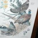 Vintage Framed Arthur Singer Print Birds,    #3 in the series