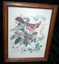 Vintage Framed Arthur Singer Print Birds,  Cardinals  #1 in the series