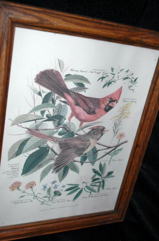 Vintage Framed Arthur Singer Print Birds,  Cardinals  #1 in the series