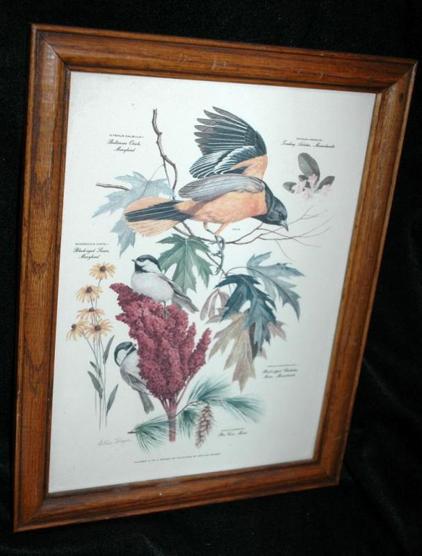 Vintage Framed Arthur Singer Print Birds,   Baltimore Oriole  #8  in the series
