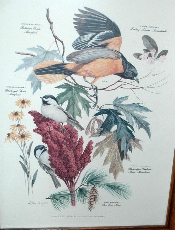 Vintage Framed Arthur Singer Print Birds,   Baltimore Oriole  #8  in the series