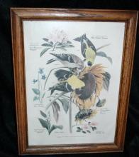 Vintage Framed Arthur Singer Print Birds, Goldfinch  #6   in the series