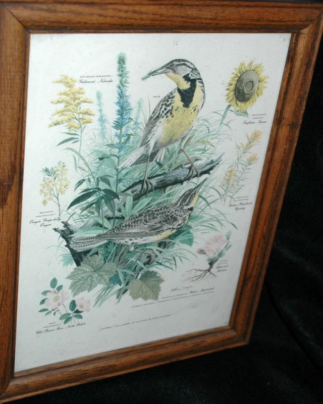 Vintage Framed Arthur Singer Print Birds, Western Meadowlark   #7 in the series