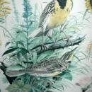 Vintage Framed Arthur Singer Print Birds, Western Meadowlark   #7 in the series