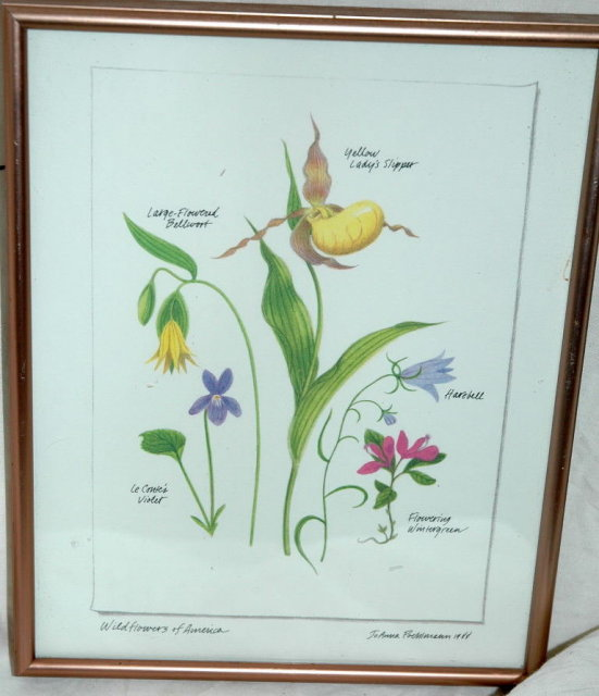 Botanical Wild Flowers of America Print   ** PRICE REDUCTION!**