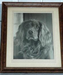 Vintage Framed Black & White Photograph of Dog