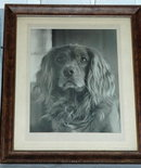 Vintage Framed Black & White Photograph of Dog