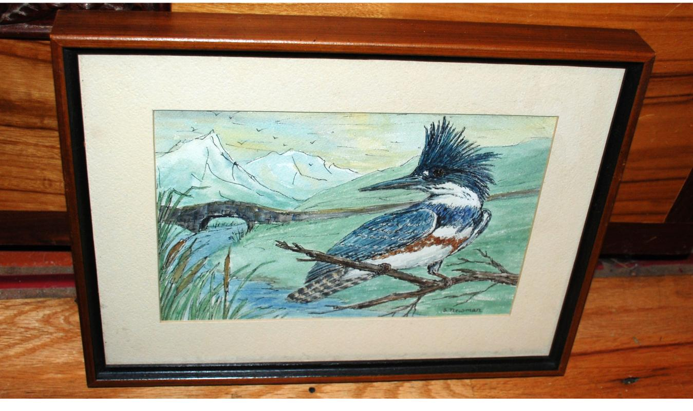 Original Watercolor painting of  Female Belted  Kingfisher by  Sheila Newman