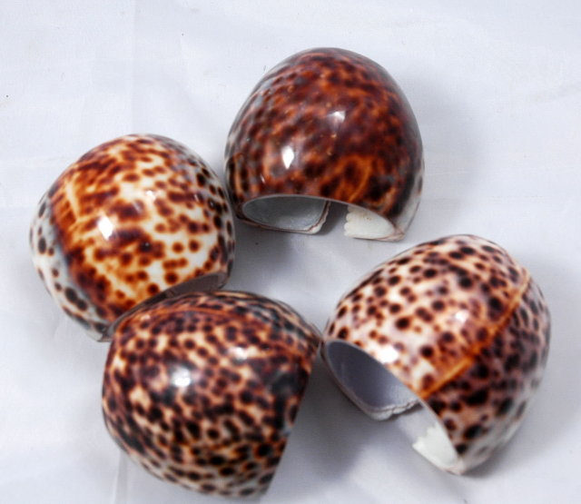 Genuine Tiger Cowrie shell Napkin Rings set of 4
