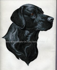 Black Labrador Dog Painting on Cloth * PRICED REDUCED! **